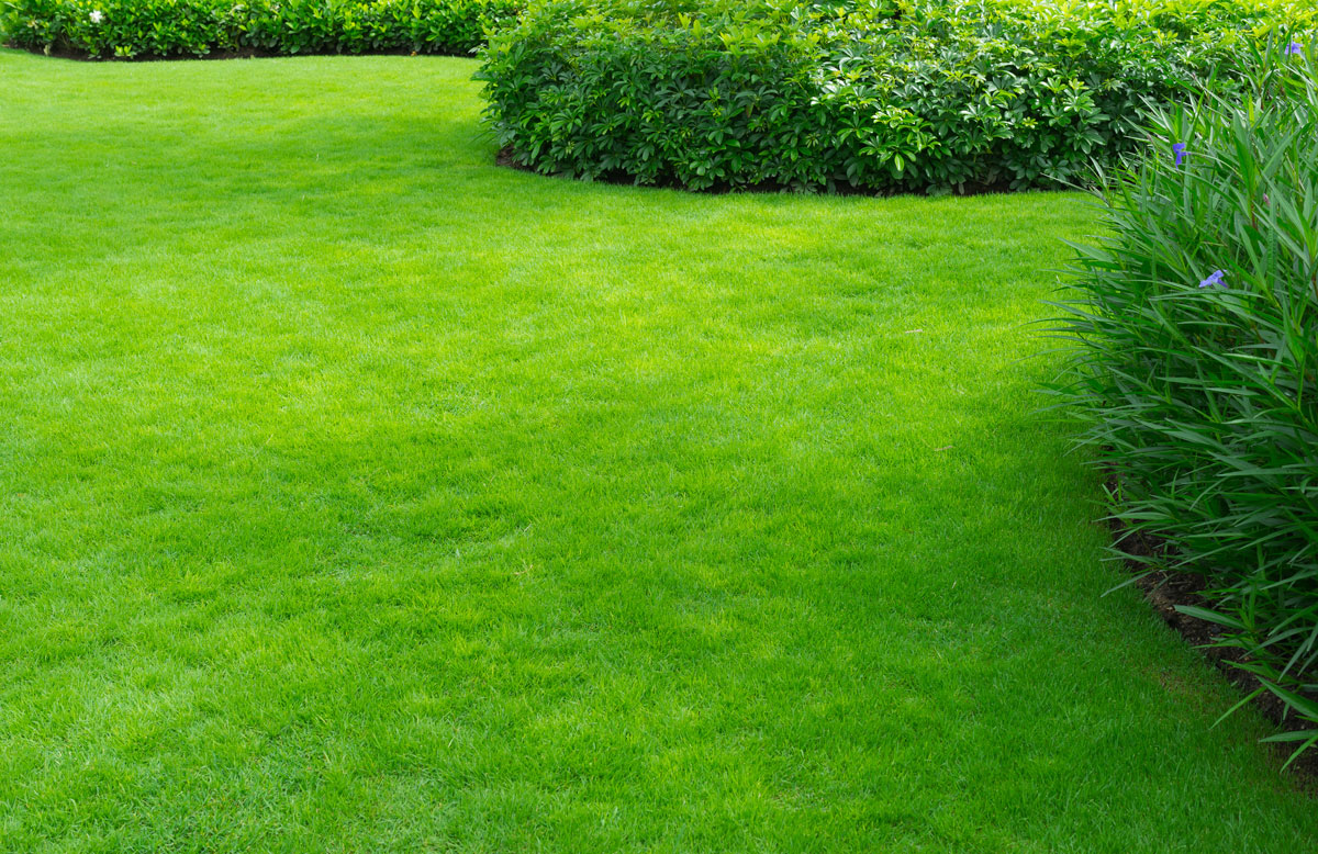 Green lawn that uses landscaping to boost it's curb appeal in Phoenix